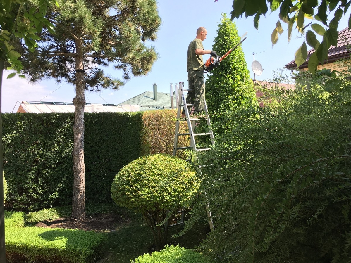 Lawn care: tree pruning